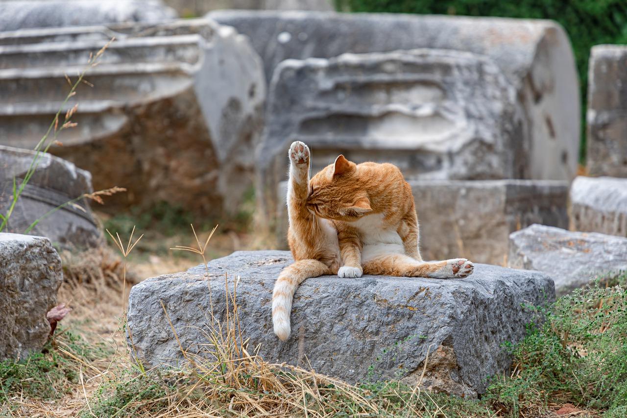 cat, wash, yoga-4481566.jpg